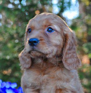 Bobby blue bell 62.5 percent Golden new pics taken 1/22